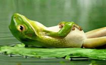 Haşlanmış Kurbağaya Döndükte Ağlayanımız Yok!