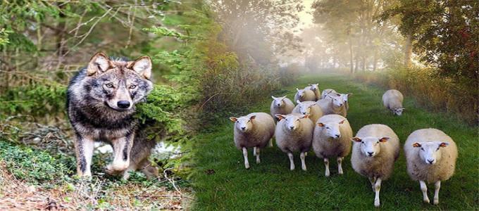 Kuzuyu Kurda Teslim Eden Sistemden Hayır Gelir mi?