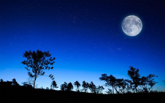 Geceler
